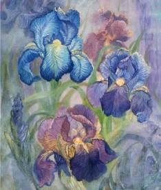 HAED - QS Iris