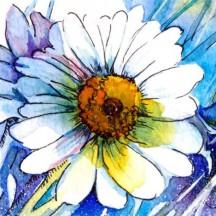 HAED - Blue Daisy