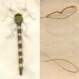 Dragonfly by Jane Nicholas