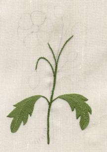 Oriental Poppy by Jane Nicholas