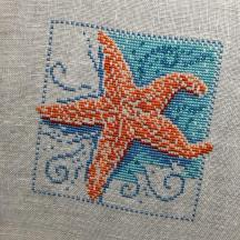 Starfish by Mill Hill